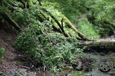 Wer zurück flussabwärts rechts bleibt sollte Dschungel- und Klettererfahrung besitzen. Der Weg wurde immer mal wieder weg gespült.