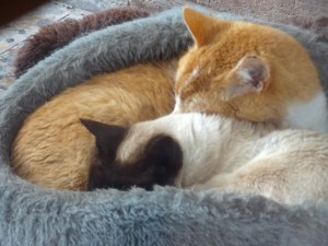 Bella and Ginge snuggle together to keep warm