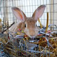 DIY Rabbit Nesting Boxes - Trial and Error