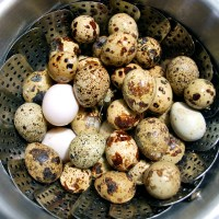 The Trick to Easy-Peel Quail Eggs