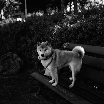 Xenotar80mm/F2.8 ILFORD XP2 SUPER