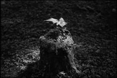 Leica MP  Summarit 5cm f1.5   ILFORD DELTA400