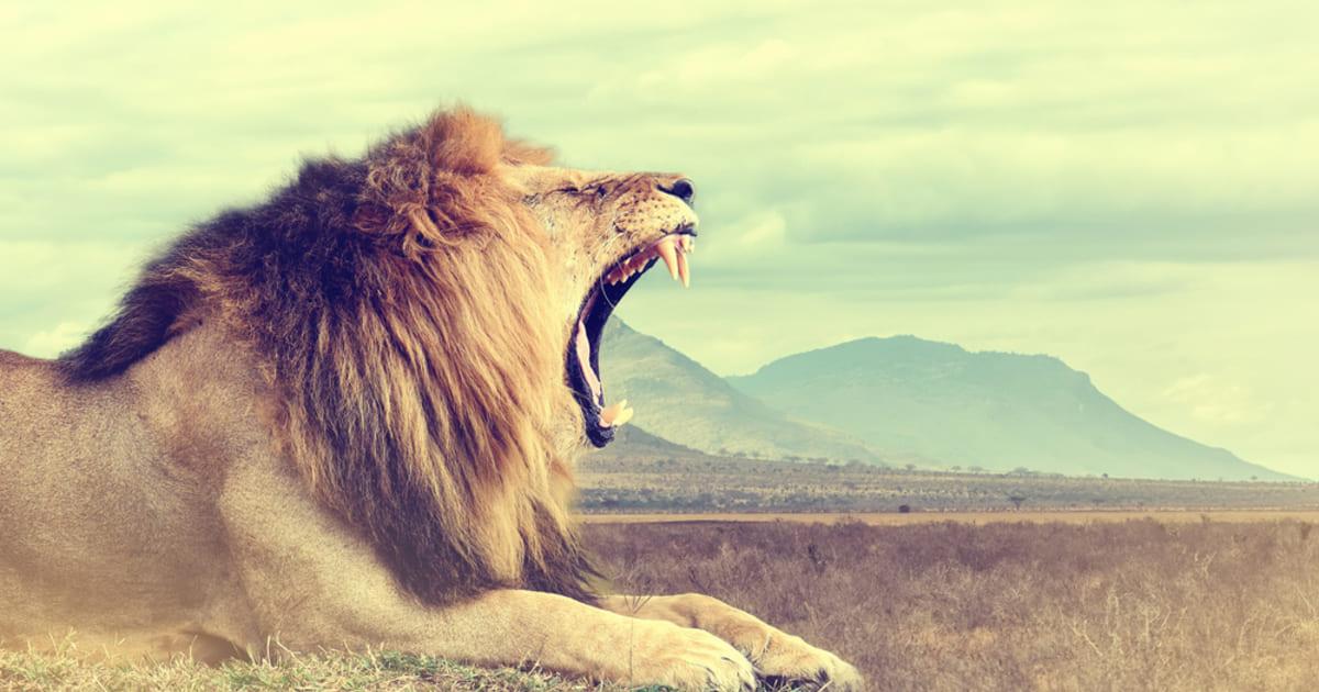 foto de um leão rugindo, representando o brasileiro no exterior e declaração de imposto de renda