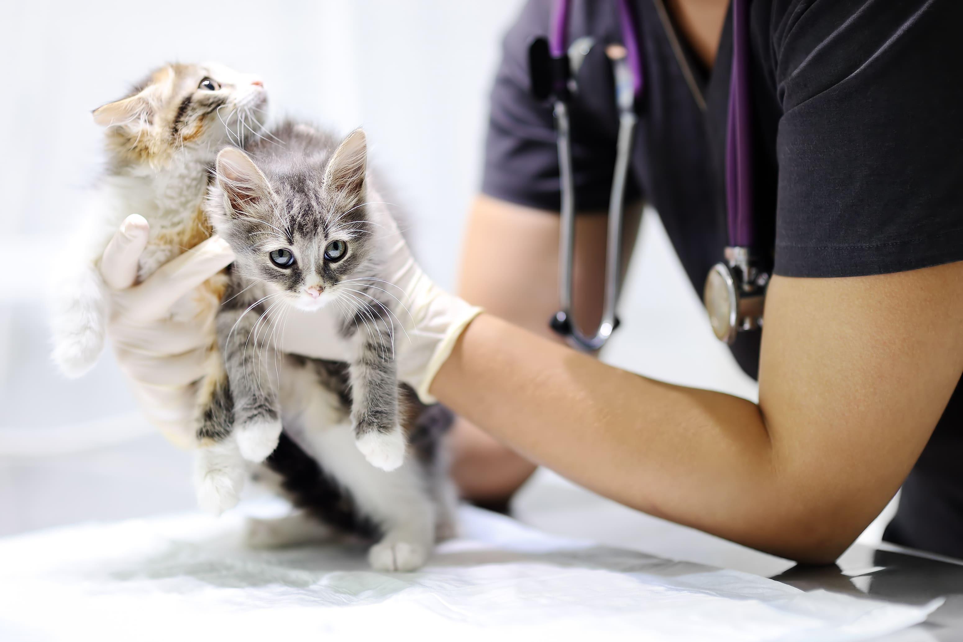 Imagem de um doutor com dois gatos filhotes para inspirar o empreendedor que deseja abrir uma clínica veterinária
