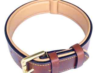 Top 3 Best Collars For Dog 2017 Review