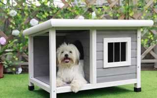 Top 10 Best Dog House 2019 Review