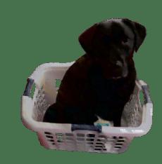 Toby-Laundry-Basket