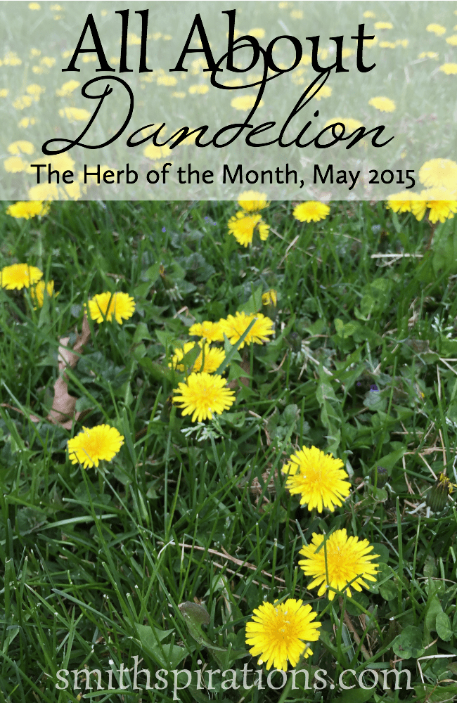 All About Dandelion, The Herb of the Month for May 2015