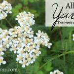 All About Yarrow: The Herb of the Month for January 2016