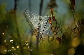 Hajnali hálózat