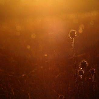 Szenogradi Norbert Peter – Aranyló naplemente