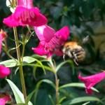 Er groeit iets in onze tuin