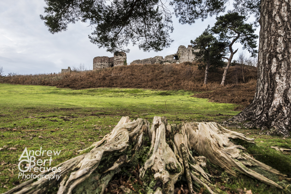 a tree stump in the foreground with Beeston Castle in the background
