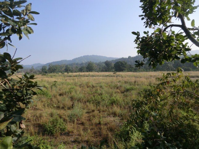 Thick grasslands, lush forests and the blue sky. Heaven!