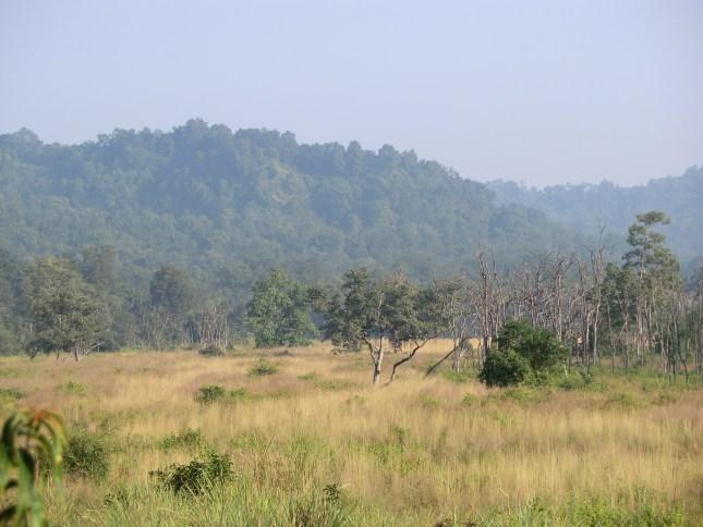 More grassland beauty!