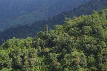 08 - selva subtropicale