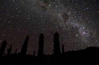 Cactus-colonnes qui portent le ciel...
