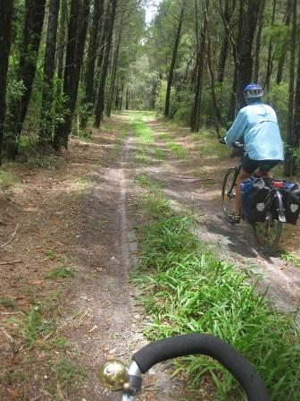 Trail through coastal Cypress Pine forest