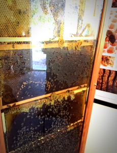 Bees hanging on the wall inside The Hive retail store