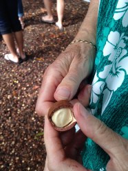 Macedonian nut