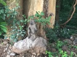 Monkeys in town causing trouble
