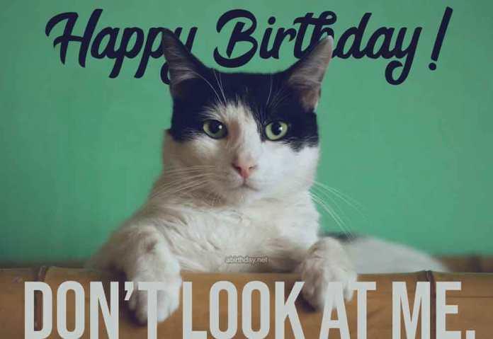 Cat Birthday Images