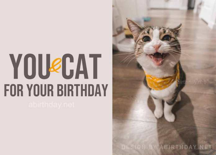 Cat Quarantine Birthday Meme