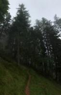 Wolkenwald