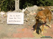 AB KI BAAR… HOME FOR DOGS. #BRINGTHECHANGE