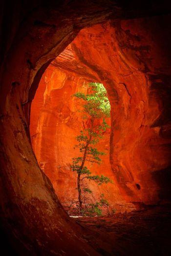 Cave_Tree
