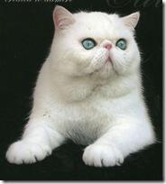 белый кошак. Инь.1