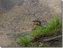 щучье оезро и финский залив. 29 мая 2010 г. граф орлов. 002