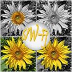 Die Montage zeigt vier Bilder von einer Sonnenblume in vier Ausführungen in Farbe ins SW und in SW mit zwei verschiedenen Farbfokussen auf die Sonnenblumenkerne und auf die Sonnenblume