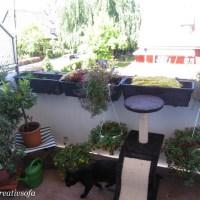 Blacky persönlicher Minigarten