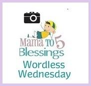 Projektbutton Wordless Wednesday Bloggers von David