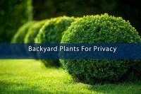Backyard Plants For Privacy  ABM Custom Homes