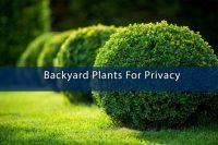 Backyard Plants For Privacy  ABM Custom Homes