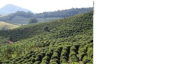 Cafeicultura no Paraná