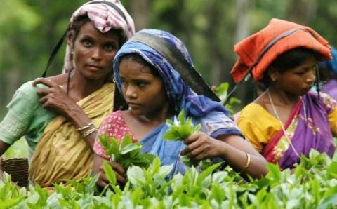 बीजेपी की अगुवाई वाली असम सरकार की चाय की मजदूरी 167 रुपये से बढ़कर 217 रुपये हो गई है