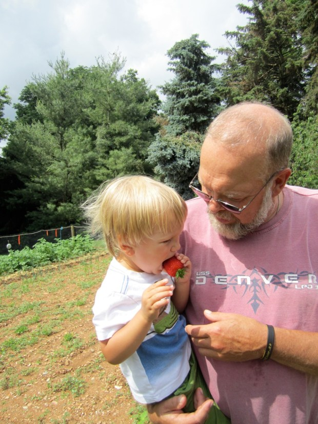 Fresh strawberries from Pappy's garden