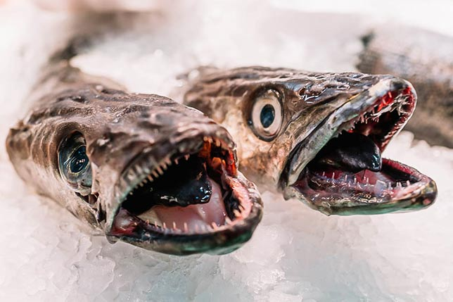 The freshiest fish and seafood is sold in Barcelona markets