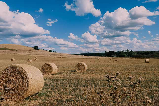 Tours in Catalonia to explore rural landscapes
