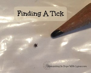 It Was Bound To Happen – Our First Tick Bites Since Getting Lyme