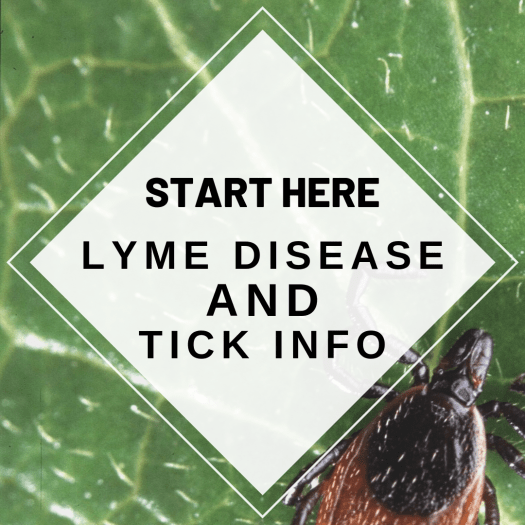 New to Lyme