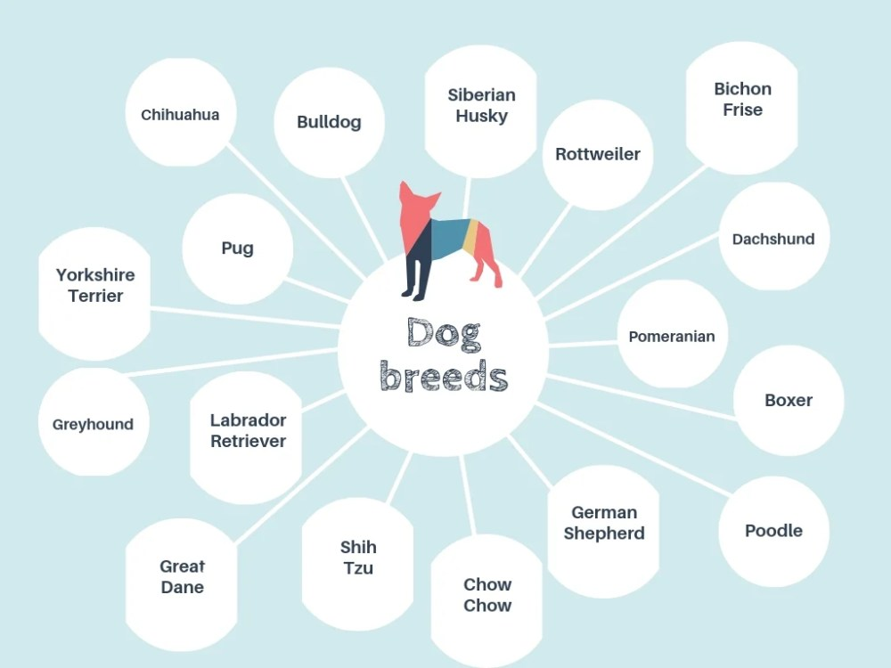 medium resolution of blue dog bubble map