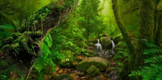 pristine Asian rainforest