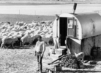 Basque Sheep Herder - Oregon Historical Society Research Library bb003838