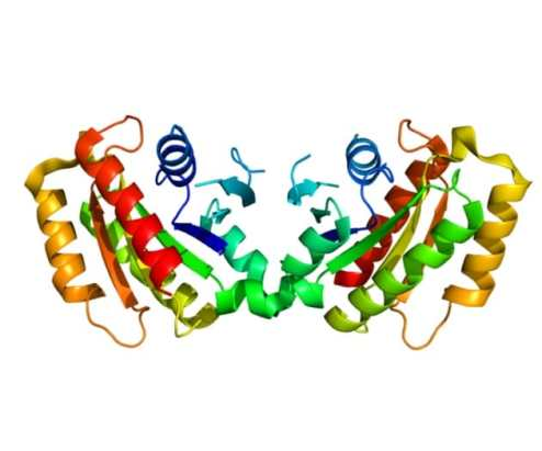 parkinsosn_proteina