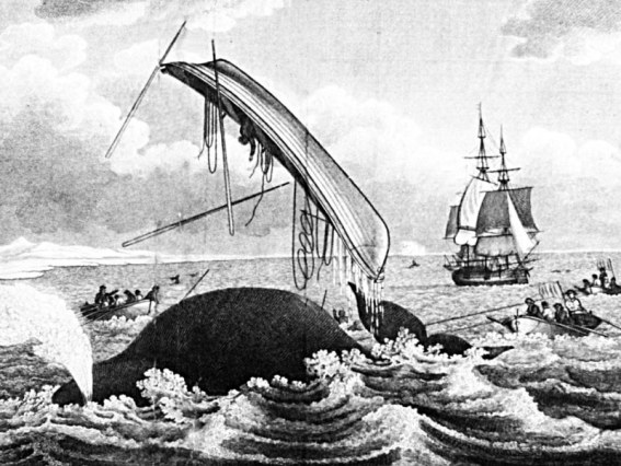 dangers of whaling_127