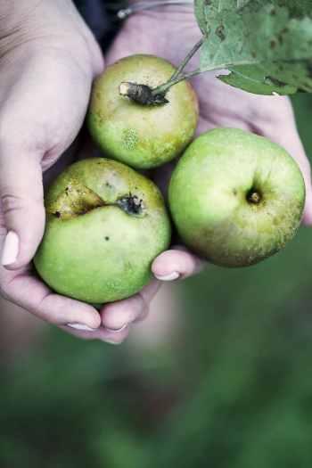 manzanas-natxitua-dubai